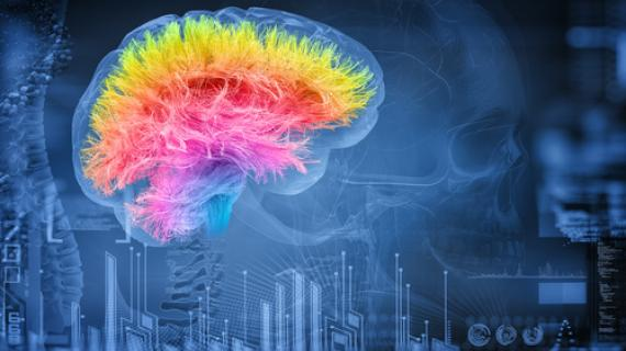 Ginsing for Brain Health